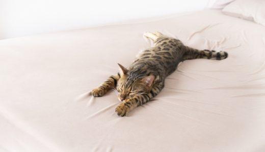 コアラマットレスを使ってみました!「寝心地は?本当に熟睡できる?」など口コミします。